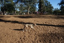 Dog park, lonesome